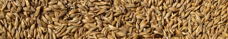 Du grain à la farine